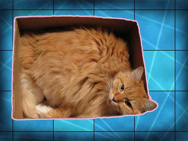 Cat tightly fitting inside a box