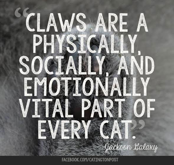 Declawing cats saying by Jackson Galaxy