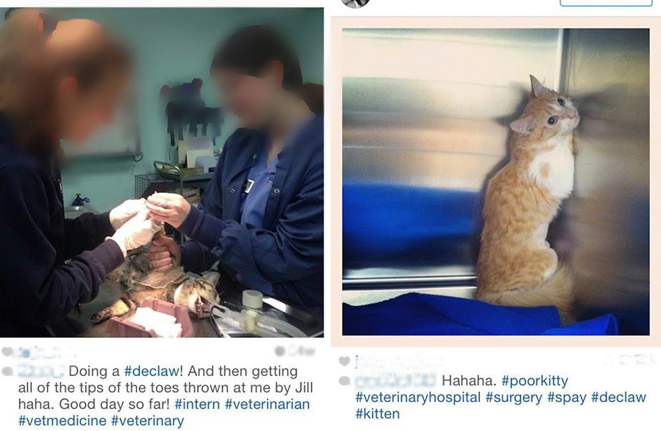 Vets laughs through declaw operation