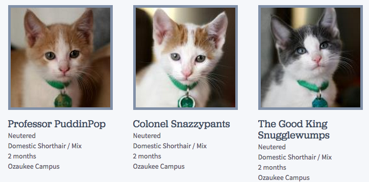 Funny Cat Pet Names Wow