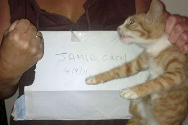 Jamie Card, cat puncher