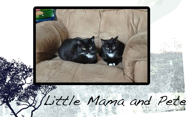 Domesticated feral cats Little Mama and Pete