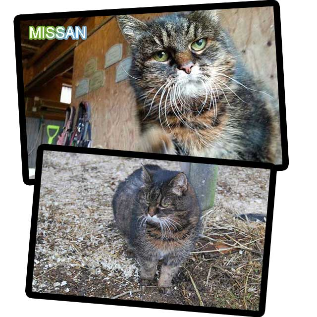 Missan world's oldest cat?