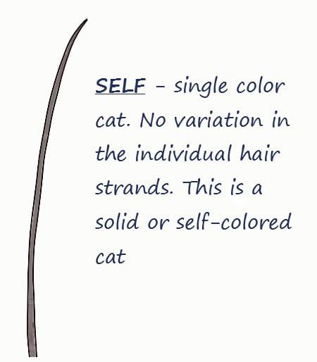 Self cat coat hair strand