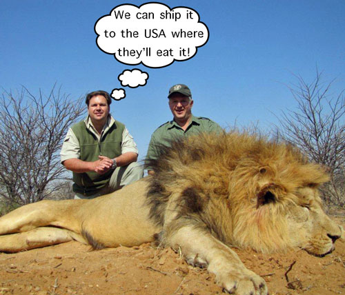 What eats a lion? People!