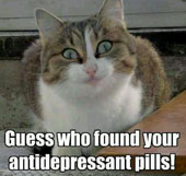 Antidepressants for cats and dogs