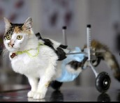 China: Cat fell ten stories