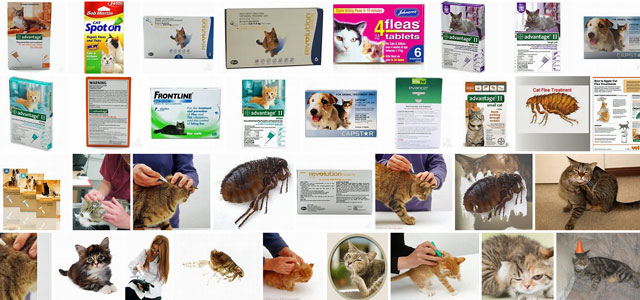 Don't Buy Cheap Cat Flea Treatments