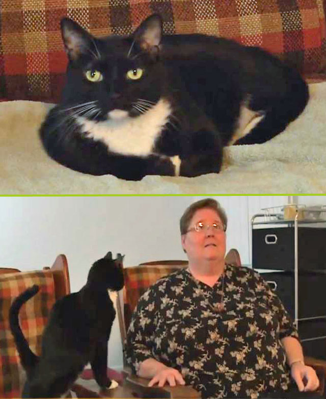 Cat reunited with caretaker after 2 years