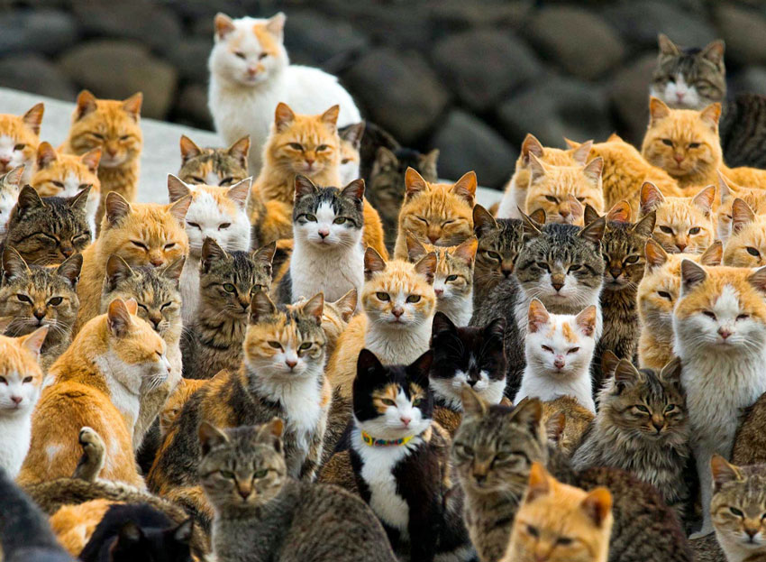 Cats on Cat Island japan