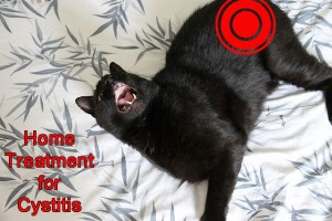 Home treatment for cat cystitis