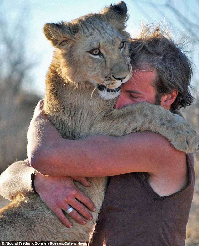 Lion love story