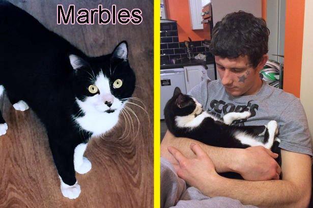 Marbles Hermaphrodite Cat