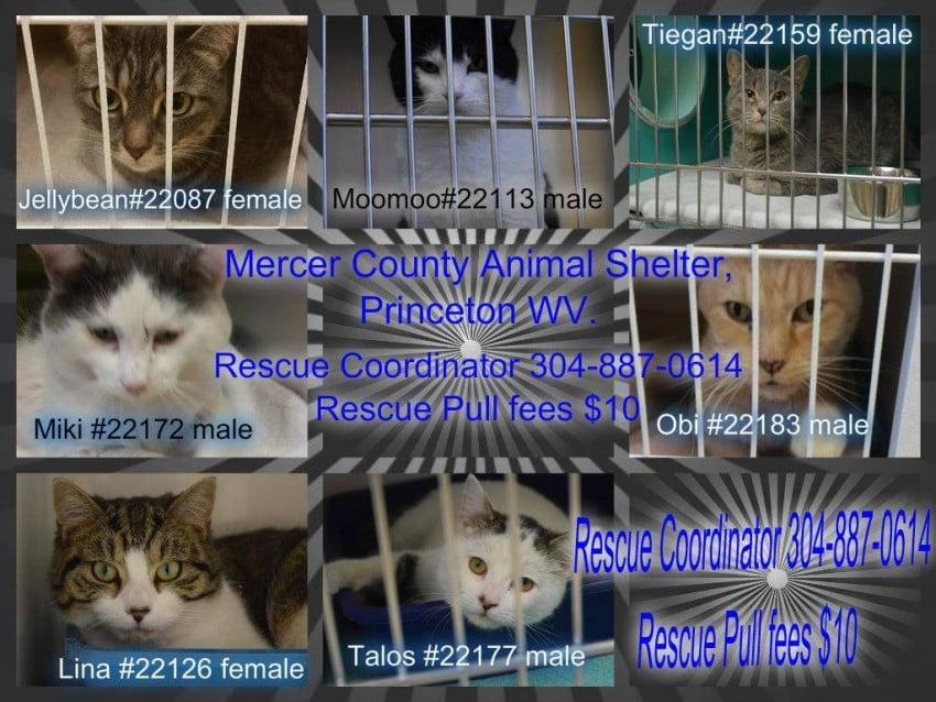 Mercer County Animal Shelter