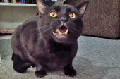 Singing cat is an anxious cat