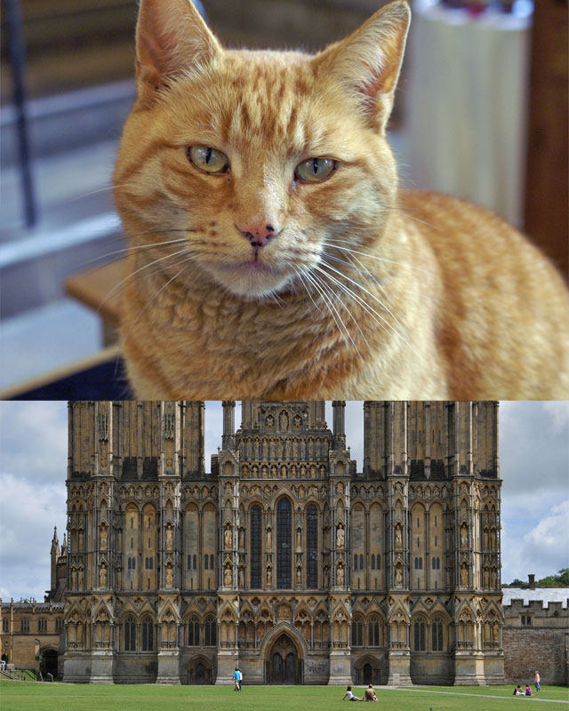 Wells Cathedral and Louis the resident mouser