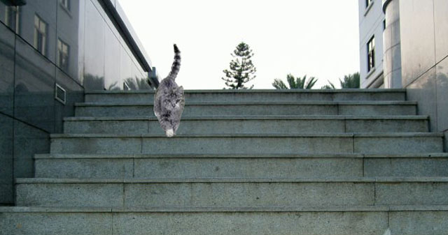 Cat going down stairs