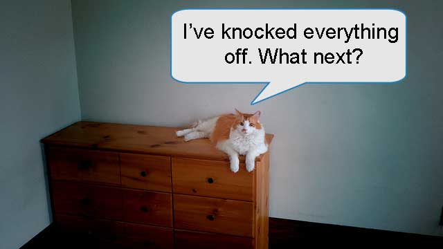 Cat knocking things off dresser