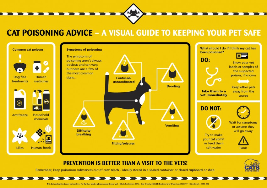 Cat poisoning advice from Cats Protection