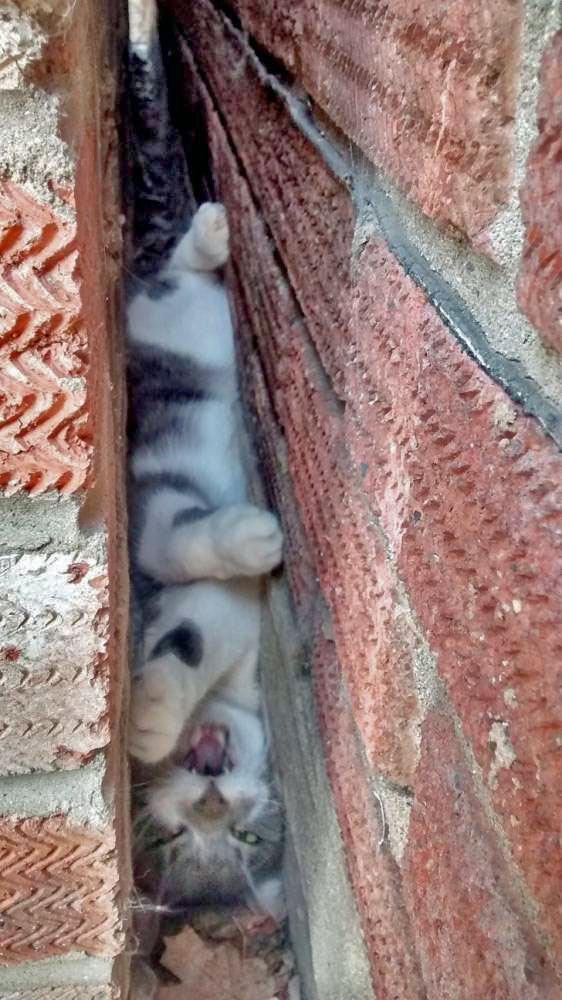 Cat trapped between two buildings