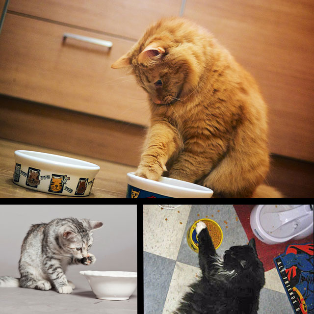 Cats using paw to eat