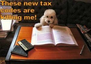 Dog studying law
