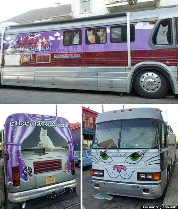 Feline circus act tour bus