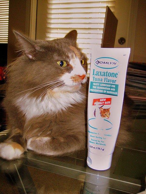 Feline Constipation