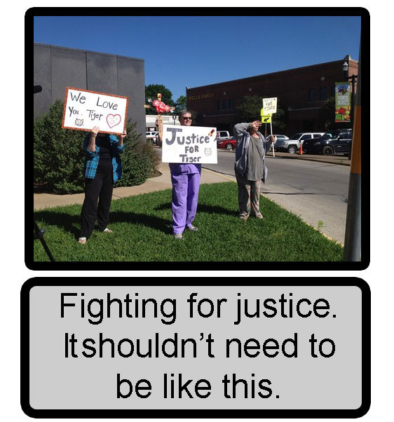 Fighting for justice for cats