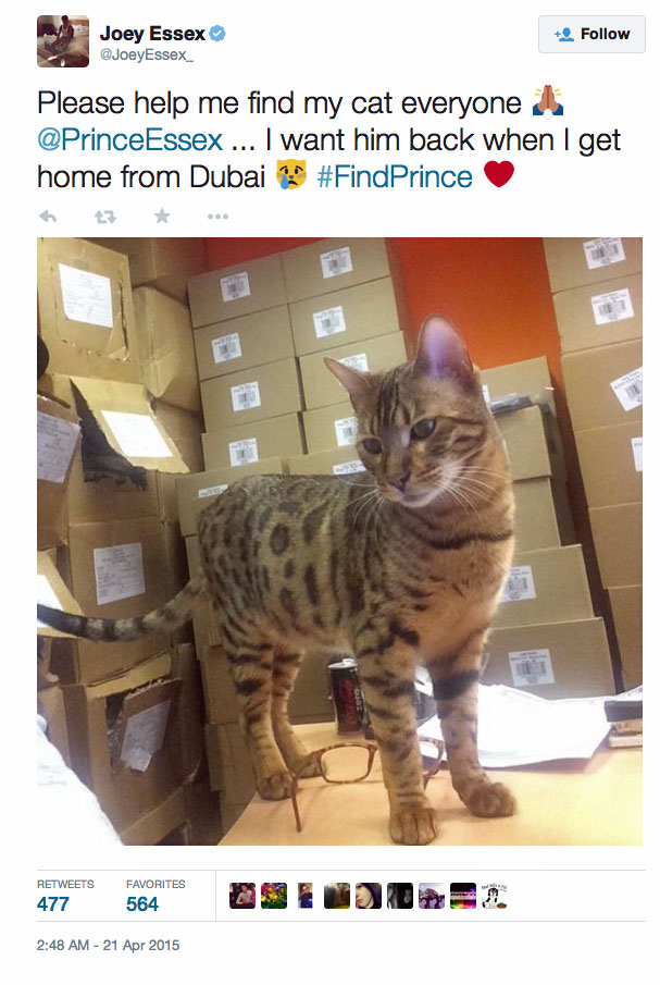 Joey's lost and found Bengal cat