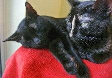 Kenyan cats