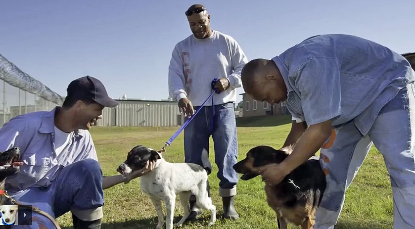 Animal shelter inside a prison in the USA