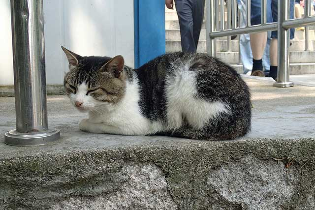 Stray cat in China