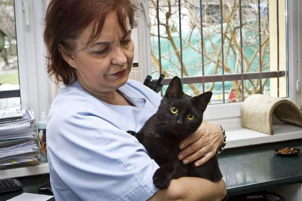 Veterinary nurse cat hugs and cares for sick shelter animals