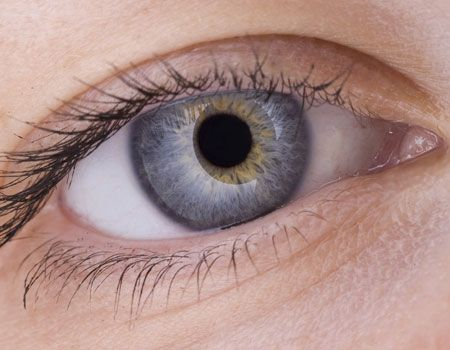 Allergen from cat may increase risk of glaucoma