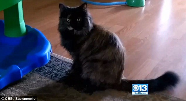 cat dies at grooming parlour