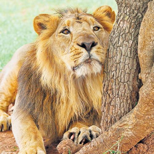 The Lions Den - San Antonio, TX | Groupon