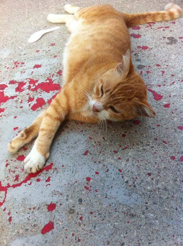 misleading photo of injured cat