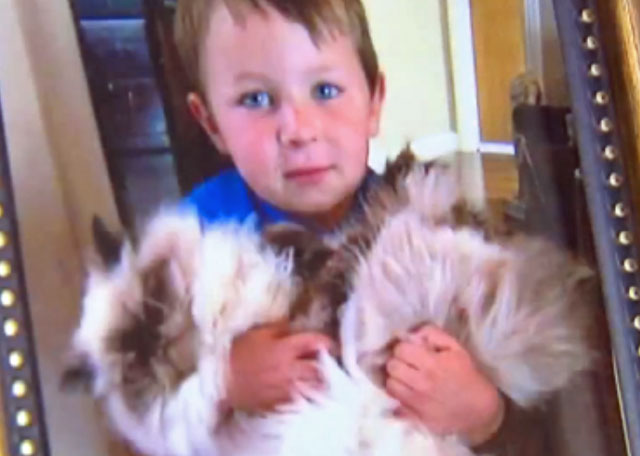 Persian cat attacked by dog at groomer. Son of owner and cat