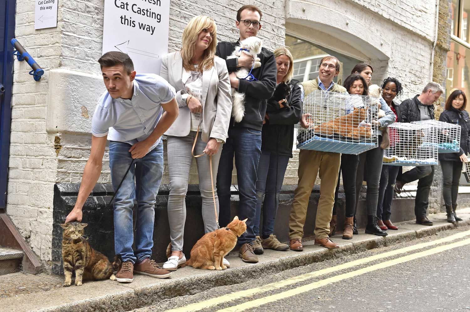 Cat line up for happiness audition