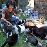 Cat rescuer Jeanne Bones