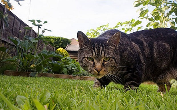 Why aren't cat owners responsible for all the wild birds their pets kill?