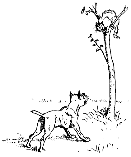 Dog chases cat up a tree