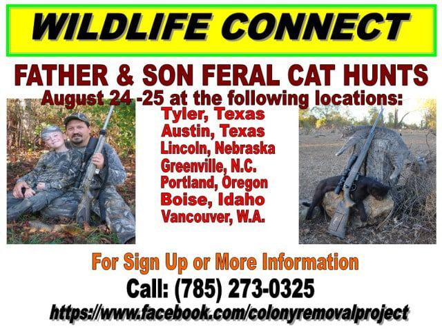 Hunting stray cats