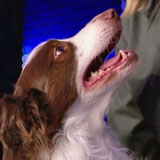 """Matise"" a trained dog on BGT"