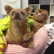Russell a tabby cat supports dog at vet hospital