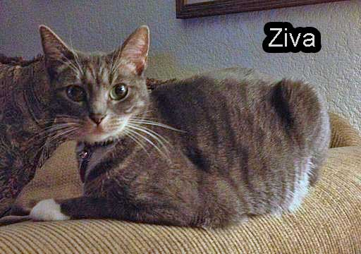 Ziva - a cat retained unlawfully by a vet