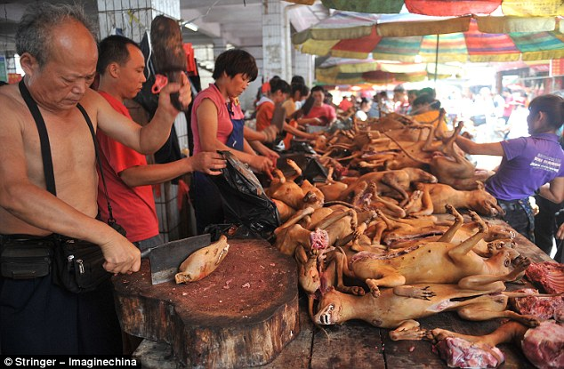 cat meat festival China