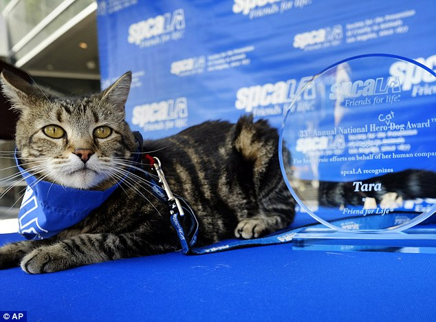 Los Angeles SPCA Award Heroic Cat For Protecting Boy