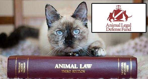 Animal League Defense Fund